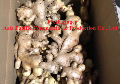 Vietnam Fresh ginger