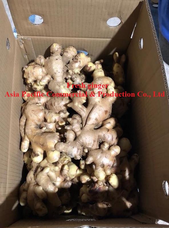 fresh ginger( apaco-vn.com)