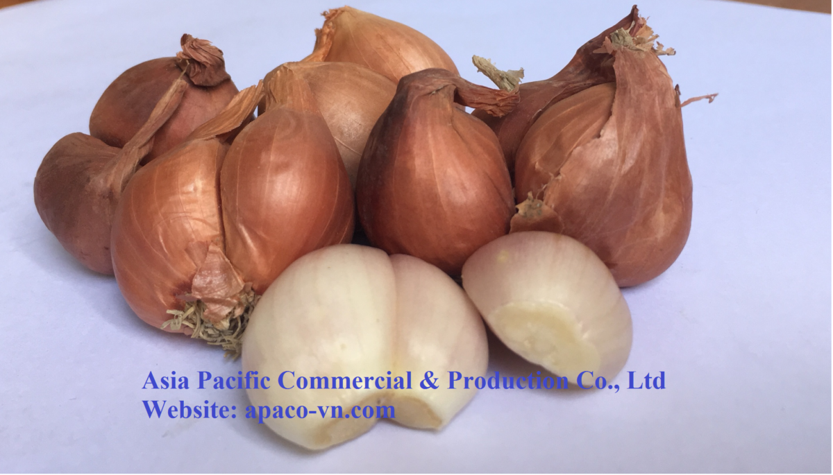 Vietnam Fresh onion