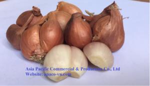 Fresh onion Vietnam(apaco-vn.com)