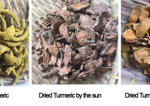 Vietnam Dried Turmeric
